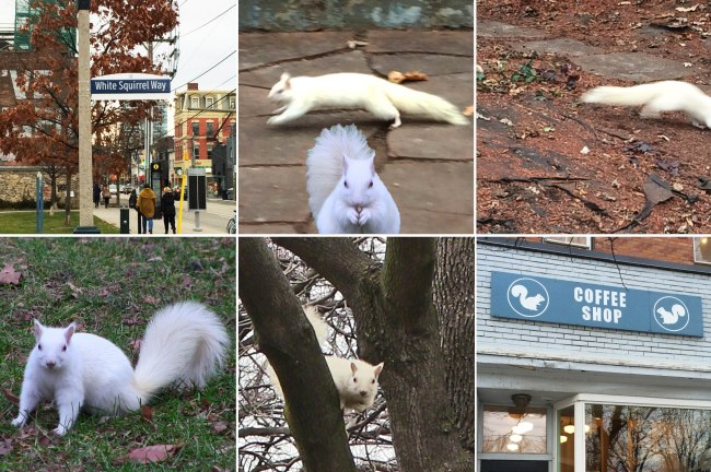 white squirrel_comp_3