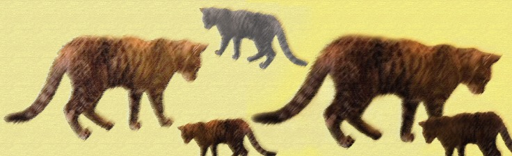 cat cafe_herding_pastels